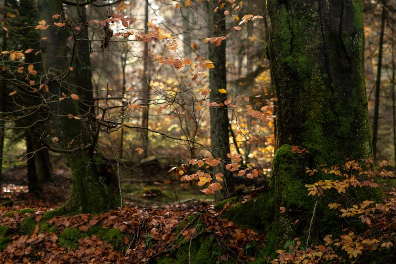 Jahresrückblick 2019, Magischer Herbstwald