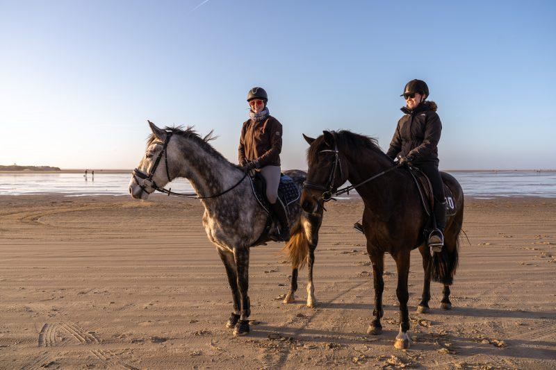 Pferde auf Rømø