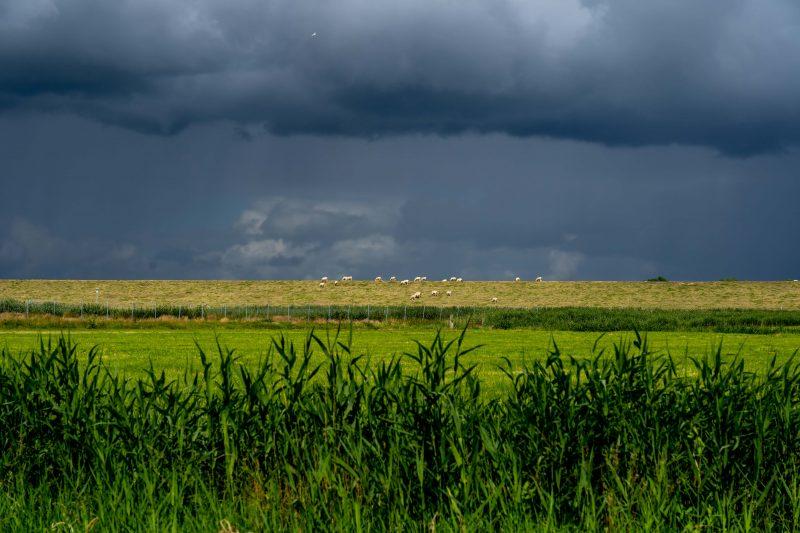Schafe vor Unwetter-Himmel